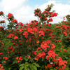 Botanical Bliss 2009 :