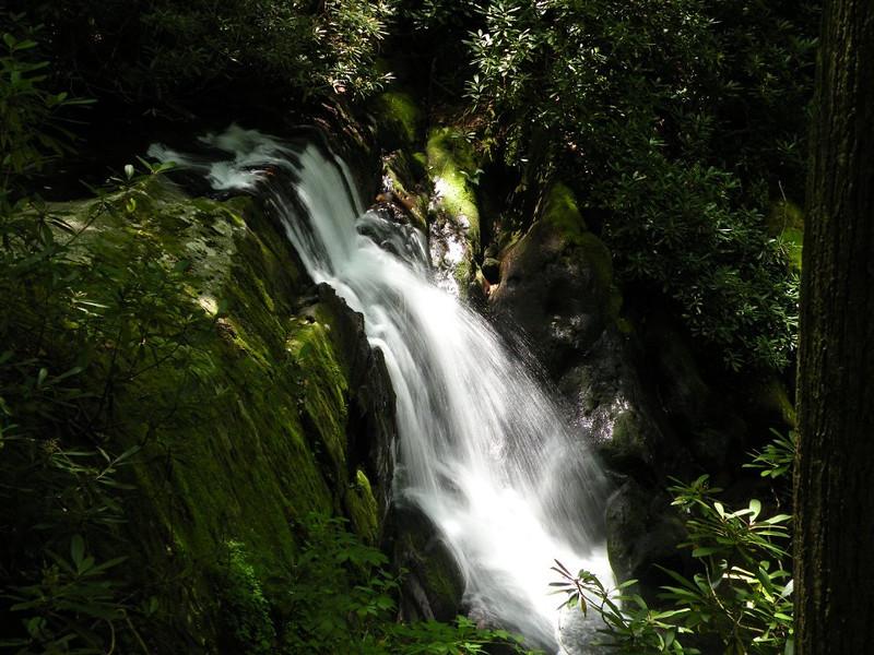 Meadow Branch Falls sycamore creek area