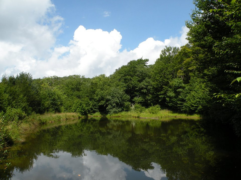 pond whigg meadow