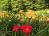 The Lily Barn : The Lily barn in Townsend sells lilies, native wildflowers, and hosts weddings. The grounds are open for taking walks!